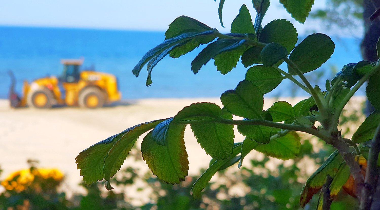 zamknięte plaże w Stegnie