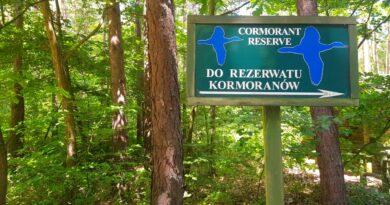 rezerwat kormoranów w Kątach Rybackich